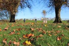 2 дерева с травой и сушат ландшафт Fota Ирландию листьев Стоковые Фото