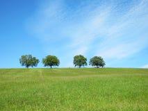 Деревья с голубым небом и облаками (30) Стоковые Изображения