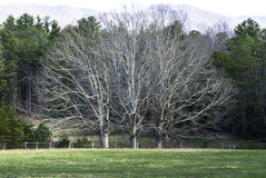 3 дерева Стоковые Фотографии RF
