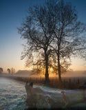 2 дерева slhouetted в заморозке на восходе солнца Стоковое Изображение RF