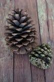 2 деревенское Pinecones на старом конце пола доски амбара вверх стоковая фотография