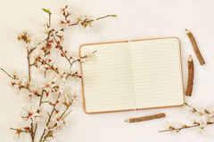 дерево вишневых цветов весны белое и открытая тетрадь Стоковое Изображение RF
