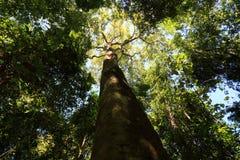 дерево на лесе Стоковое Изображение