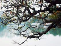 дерево над озером Стоковые Изображения RF