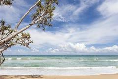 дерево на тропическом пляже, красивой предпосылке пейзажа на лето Стоковая Фотография RF