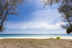 дерево на тропическом пляже, красивой предпосылке пейзажа на лето a Стоковые Изображения RF