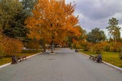дерево с листьями желтого цвета на переулке Стоковые Фотографии RF