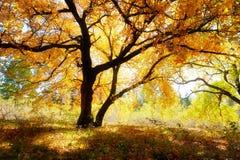 2 деревья и тени клена Стоковые Изображения RF
