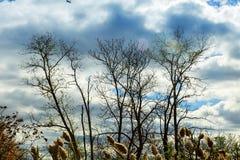 деревья осени без листьев, чуть-чуть ветвей дерева дуб против неба Стоковые Изображения RF