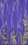 деревянная предпосылка с ветвью вишневых цветов и голубого flo стоковое изображение