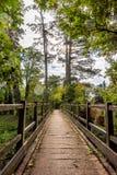 деревянное моста старое Естественная винтажная предпосылка стоковые изображения