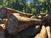 деревянное начало Стоковые Изображения RF