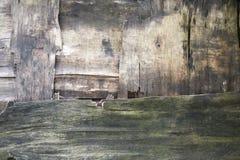 деревянное предпосылки старое старый вал Стоковое Изображение RF