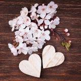 2 деревянных сердца помещенного славно с красивым вишневым цветом Стоковые Фотографии RF