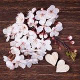 2 деревянных сердца помещенного славно с красивым blo вишни весны Стоковые Фото