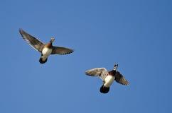 2 деревянных утки летая в голубое небо Стоковая Фотография RF