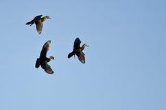 3 деревянных утки летая в голубое небо Стоковое Фото