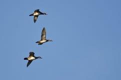3 деревянных утки летая в голубое небо Стоковое Изображение