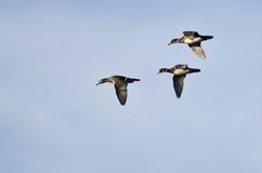 3 деревянных утки летая в голубое небо Стоковая Фотография