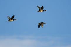 3 деревянных утки летая в голубое небо Стоковые Изображения