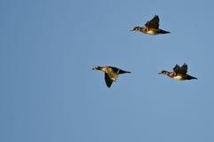 3 деревянных утки летая в голубое небо Стоковое Изображение RF