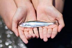 держать рыб Стоковое фото RF