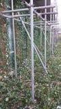 леса Стоковые Изображения