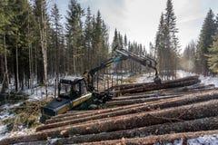 лесохозяйство Лесопогрузчик нагружает тимберс в древесинах зимы стоковое изображение rf