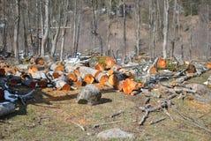 лесохозяйство стоковая фотография rf