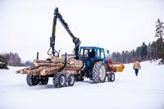 лесохозяйство стоковое фото