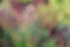 Естественная абстрактная нерезкость предпосылки Стоковое фото RF