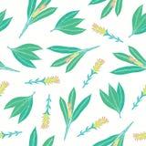 Естественная безшовная картина с листьями и цветорасположениями турмерина Красивая рука цветкового растения Ayurvedic нарисованна иллюстрация вектора