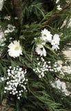 Естественная белая маргаритка стоковое изображение