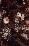 Естественная белая маргаритка стоковые фотографии rf