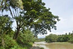 Естественная вегетация вдоль реки Bulatukan, Tamlangon, Matanao, Davao del Sur, Филиппин стоковое изображение rf