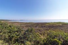 Естественная вегетация заболоченного места на озере Сент-Люсия Южной Африке Стоковое фото RF