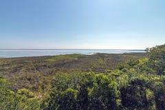 Естественная вегетация заболоченного места на озере Сент-Люсия Южной Африке Стоковое Изображение
