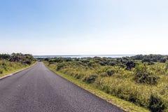 Естественная вегетация заболоченного места на озере Сент-Люсия Южной Африке Стоковая Фотография RF