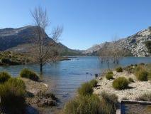 естественная вода Стоковые Изображения RF