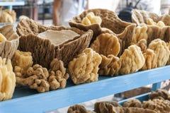 Естественная губка моря коралла стоковое изображение rf