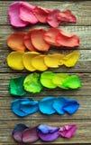 Естественная деревянная предпосылка с флагом гей-парада лепестков розы радуги Стоковая Фотография