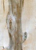Естественная деревянная текстура стоковые изображения