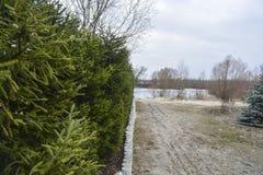 Естественная живущая загородка деревьев Стоковое Фото