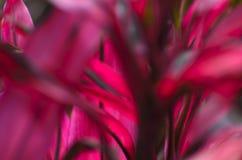 Естественная запачканная предпосылка - красота природы Стоковое Изображение