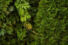 Естественная зеленая предпосылка в солнечном свете, абстрактном круглом bokeh от зеленых листьев, стоковое изображение