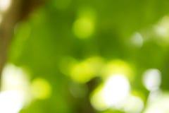 Естественная зеленая предпосылка Bokeh, абстрактные предпосылки Стоковые Фото