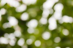 Естественная зеленая предпосылка Bokeh, абстрактные предпосылки Стоковые Фотографии RF