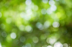 Естественная зеленая предпосылка Bokeh, абстрактные предпосылки Стоковые Изображения