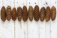 Естественная линия предпосылка конусов сосны Брайна белизны стоковые изображения