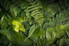 Естественная листва листьев, концепция природы Стоковое фото RF